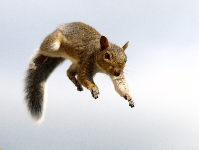 Fly, Little Squirrel, Fly!