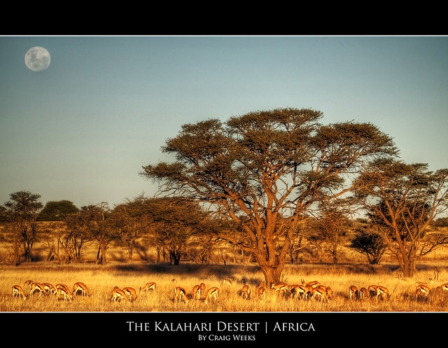 The Kalahari Desert | Africa | Flickr - Photo Sharing!