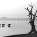 0081 Cattle crossing a lake--Myanmar