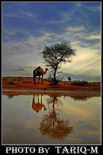 Camel reflection HDR