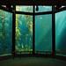 Kelp Forest by Charlene-SJ
