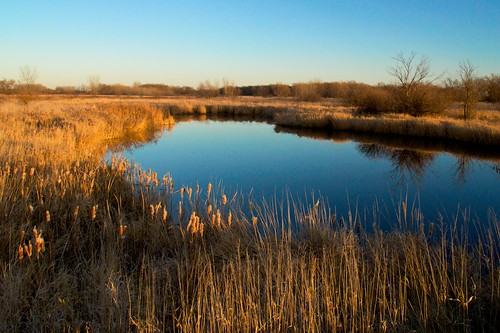 fall water grass reeds afternoon unitedstates bluesky marshall cattails mn slew