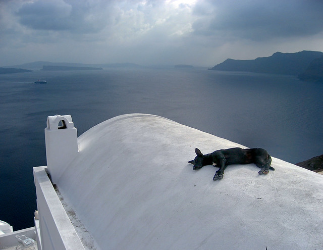 doggy bliss on a roof