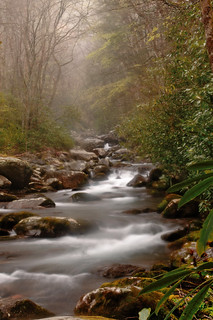 Rain in the Smokies