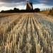 Wheatstalks and Windmill, Halnaker