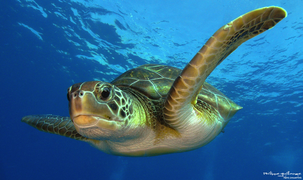 YW5D - La Tortuga Island