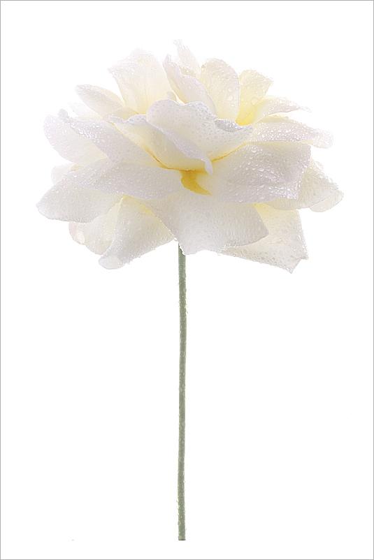 Flower white flower white rose water drops water drops flower white flower white rose water drops water drops on mightylinksfo