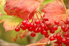 Seasons: northern autumn d'automne del otoño 秋 di autunno herbst