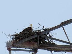 mama in nest