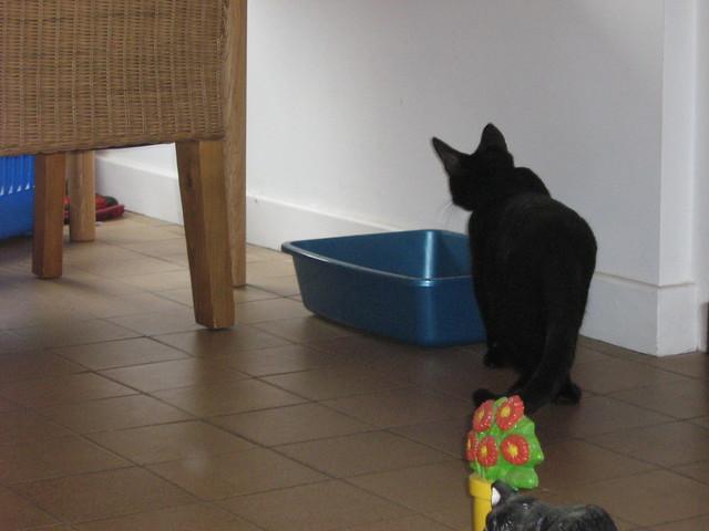 Cardboard Cat Litter