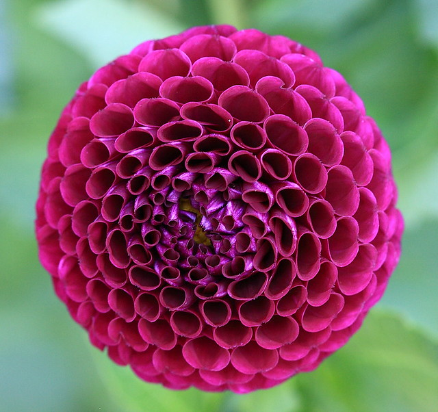 pattern in nature 1 introductionof all shapes in nature that of the human body is the most pleasing it has no exact symmetry, but is almost achiral it incorporates aspects of rotational, and even spherical symmetry, which is nowhere exact.
