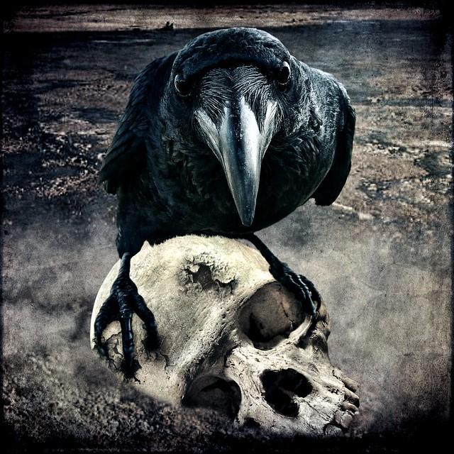 Brenda Clarke - The Raven