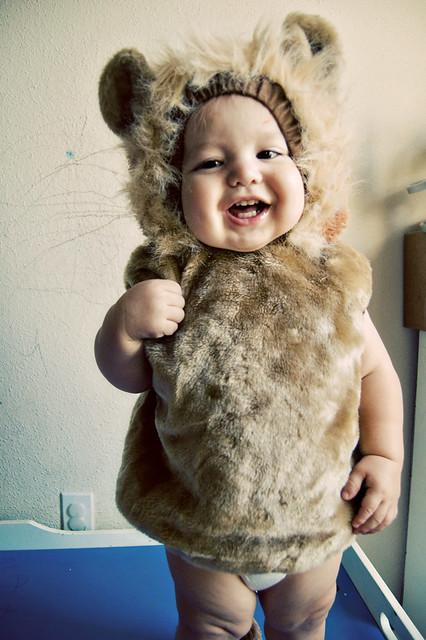 365.275: baby lion