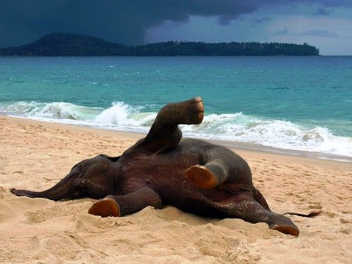 Phuket Elephant on the Beach
