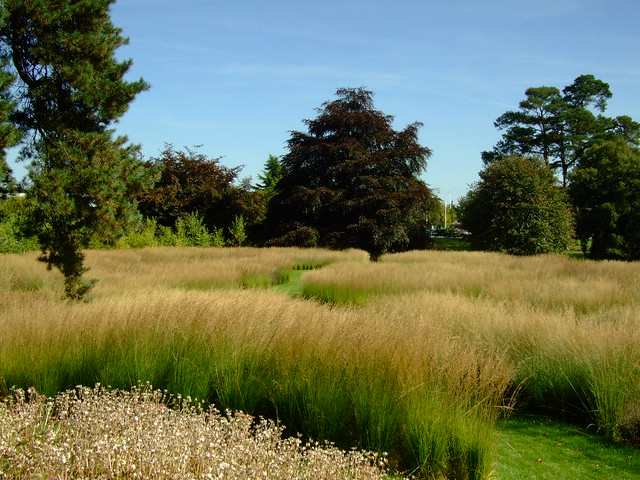 Trentham gardens piet oudolf 39 s rivers of grass a photo for Gardening with grasses piet oudolf