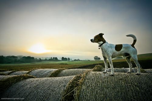 trees light sky dog mist field fog proud sunrise haze canon5d sigma1224mm haybales bastian beautifulnature voetmann halmballer
