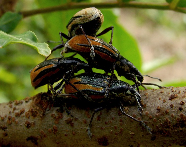 disgusting perverted bugs flickr photo sharing