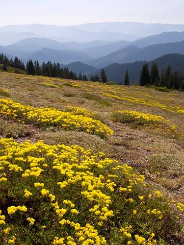 flowers yellow oregon nikon meadow hills d200 valleys southernoregon windygap grayback