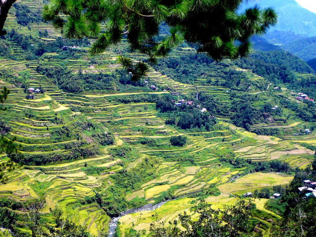 コルディリェーラの棚田群を山から眺めた風景