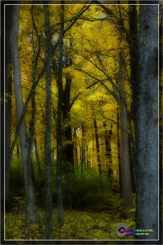 trees fall woods foliage