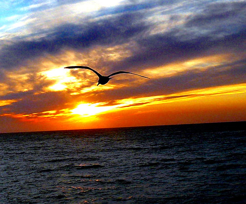 ocean sunset sky sun clouds pacific seagull gull flickrdiamond