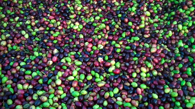 olives ready to be pressed from Flickr via Wylio