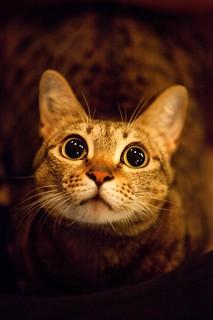 路上撿到一隻貓