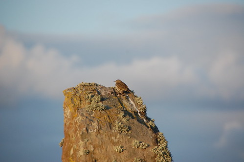 Bird on Stone at Ring of Brodgar