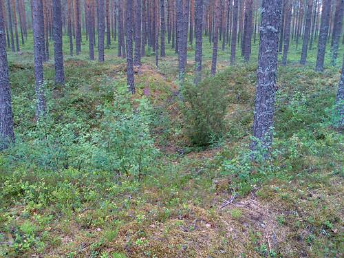 shozu finland geotagged n80 tarkiln tervahauta halsua geo:lon=2425317 geo:lat=6339501 tjärdal