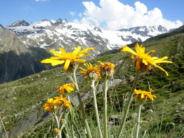 Valle Aosta, Alpes