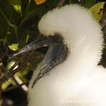 Demanding Kid - Galapagos Island