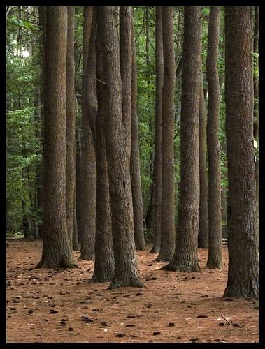 grove massachusetts pines northshore ipswichriver topsfield perkinsisland massaudubon canona630