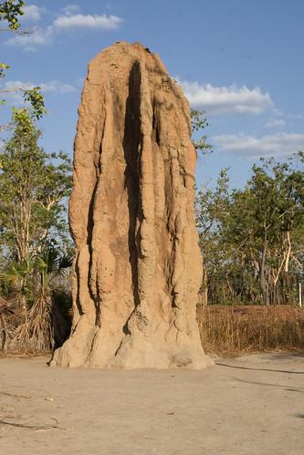 Termite Invasion