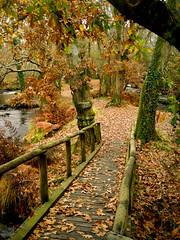 Outono en Verdes