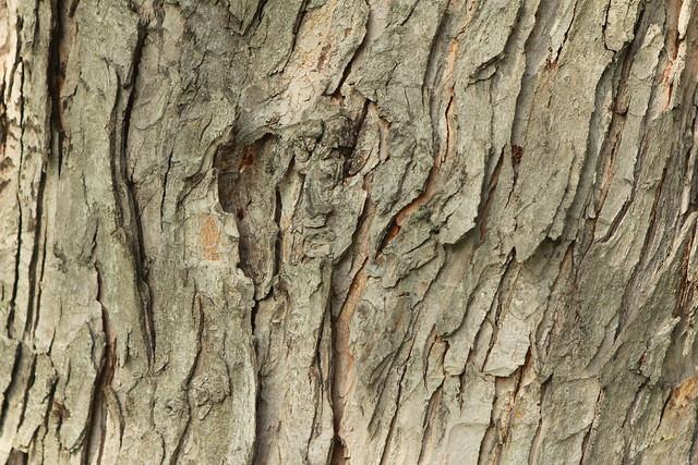 tree park maple - photo #23