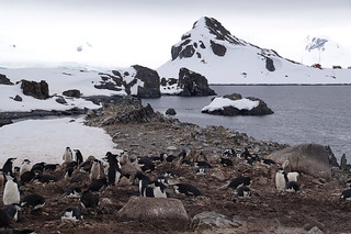 096 Wandeling Halfmoon Island - kinbandpinguins