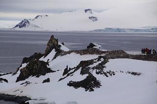 040 Wandeling Halfmoon Island - kinbandpinguins
