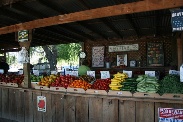 Fruit Veg Stand For Kitchen Bench