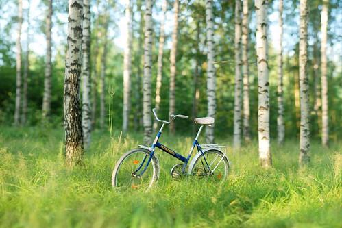 morning trees light summer panorama green grass bike bicycle forest sunrise suomi finland koivu nikon warm f14 85mm birch 2009 jyväskylä metsä kesä ptgui vihreä d80 starty brenizermethod ~24mm