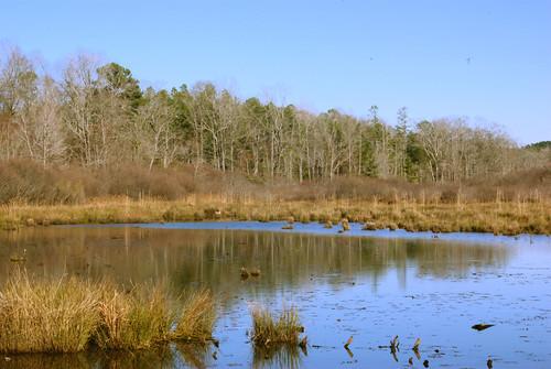 ranch lake holly marsh bog