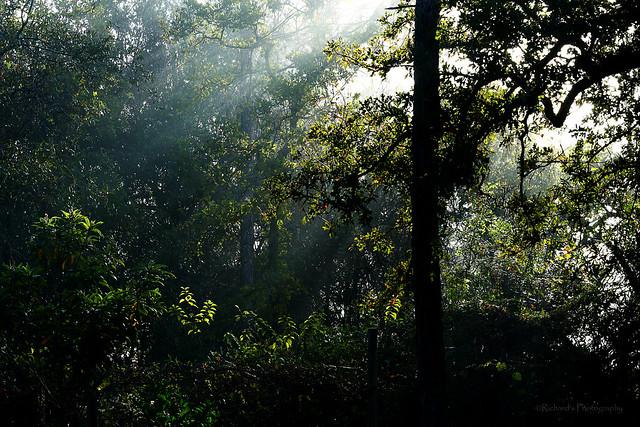 Foggy Morning in Florida