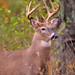 11pt Buck! by JRIDLEY1