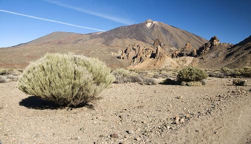 Retama del Teide