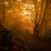 Fog season by JD Photographie.