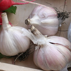 red onion(0.0), shallot(0.0), plant(0.0), vegetable(1.0), onion(1.0), garlic(1.0), produce(1.0), food(1.0),