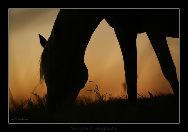 Horse Silhouette by Sunyata Photography
