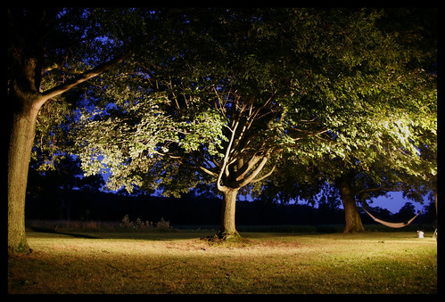 trees sunset night digital creek canon farm maryland spotlight hammock shipping chestertown xti shippingcreekfarm