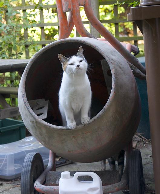 Cat Cement Mixer Toy
