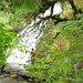 Small photo of Tom and Ruby at Alsea Falls, OR