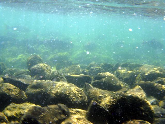 River Bottom Catahoulas